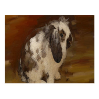 Cute, Baby Lop Eared Rabbit Postcard