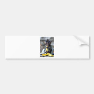 Cute baby macaque monkey enjoying banana bumper sticker