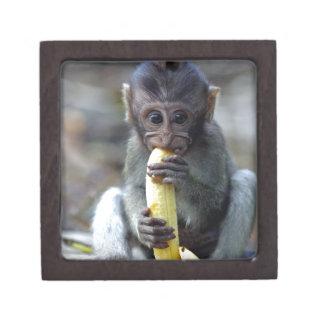 Cute baby macaque monkey enjoying banana premium jewelry boxes