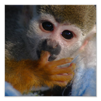 Cute Baby Monkey Poster