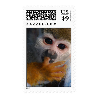 Cute Baby Monkey  Rescued Postage