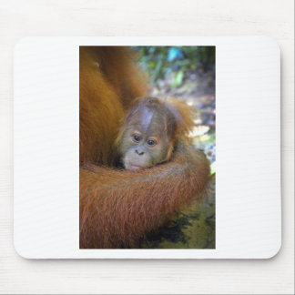 Cute baby orangutan in mothers arms mouse pad