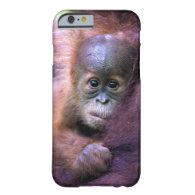 Cute baby orangutan in Sumatra iPhone 6 Case
