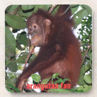 Cute Baby Orangutan in Tanjung Puting Drink Coasters