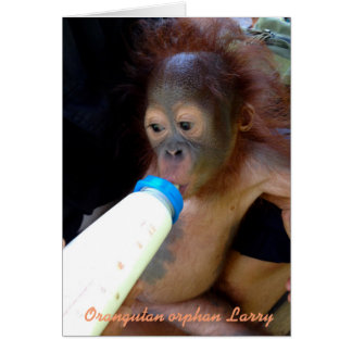 Cute Baby Orangutan Orphan Larry Card
