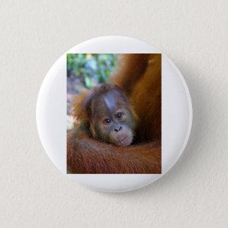 Cute baby Orangutan Pinback Button