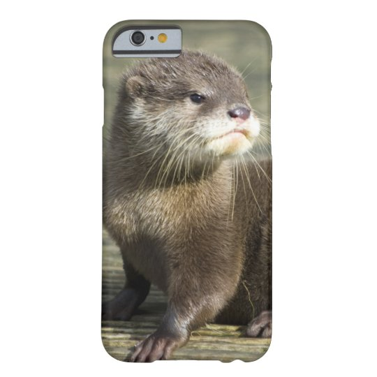 Cute Baby Otter Barely There iPhone 6 Case