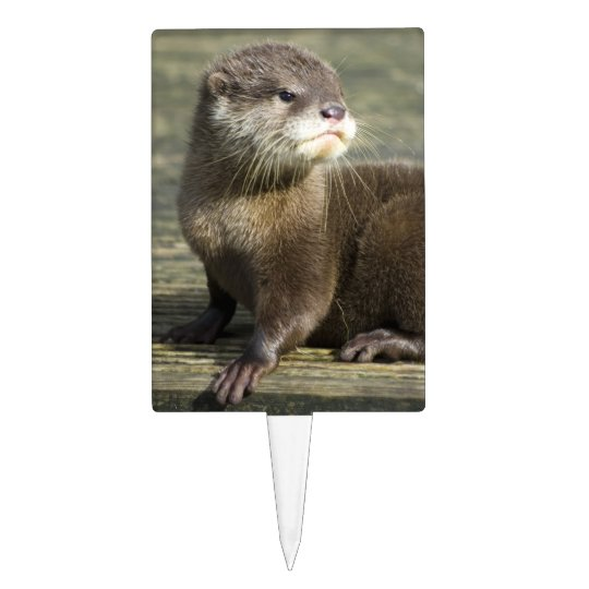 Cute Baby Otter Cake Topper
