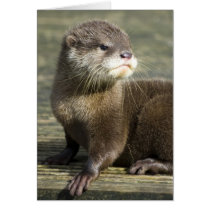 Cute Baby Otter Card