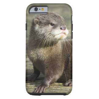 Cute Baby Otter Tough iPhone 6 Case