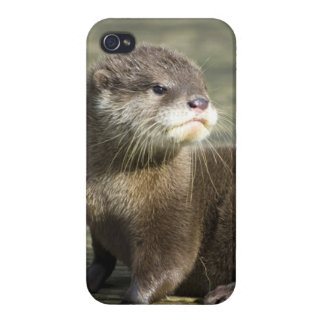 Cute Baby Otter Case For iPhone 4