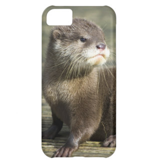 Cute Baby Otter Cover For iPhone 5C