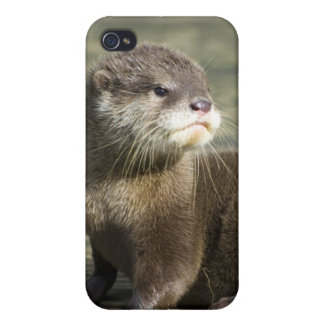 Cute Baby Otter iPhone 4/4S Cover