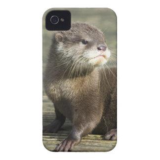Cute Baby Otter iPhone 4 Case-Mate Case