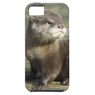 Cute Baby Otter iPhone 5 Cases