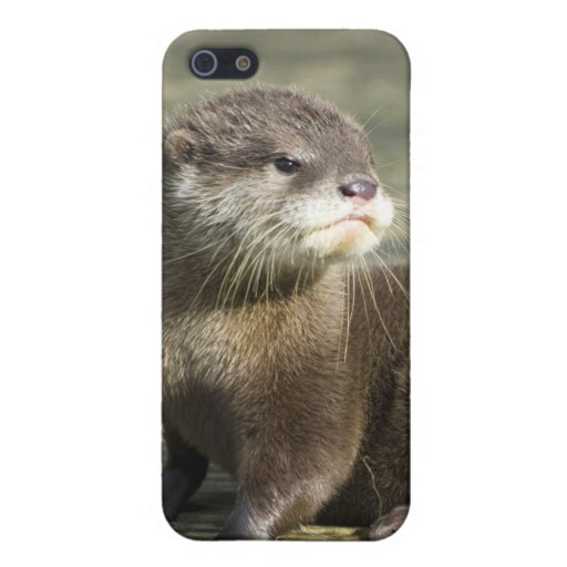 Cute Baby Otter iPhone 5 Cover