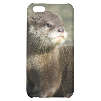 Cute Baby Otter iPhone 5C Covers