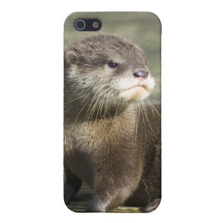 Cute Baby Otter iPhone SE/5/5s Case
