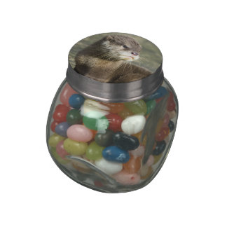 Cute Baby Otter Jelly Belly Candy Jar