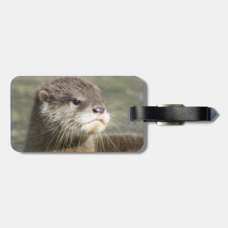 Cute Baby Otter Bag Tag