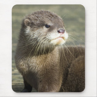 Cute Baby Otter Mouse Pad
