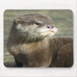 Cute Baby Otter Mouse Pads