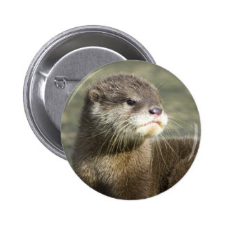 Cute Baby Otter Pinback Button