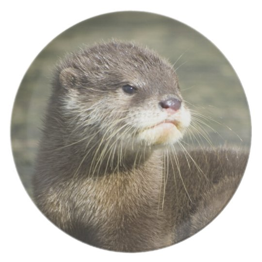 Cute Baby Otter Plate