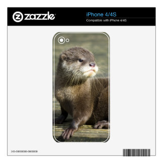 Cute Baby Otter Skins For iPhone 4