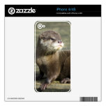 Cute Baby Otter Skin For iPhone 4S