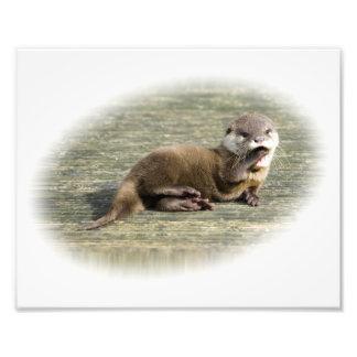 Cute Baby Otter Yawning Photo Print