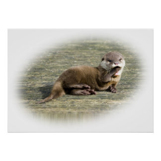 Cute Baby Otter Yawning Poster