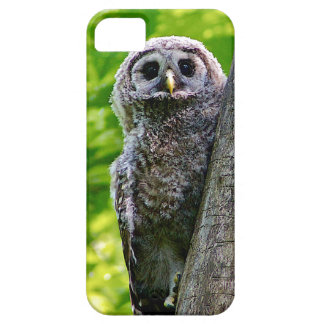 Cute Baby Owl iPhone 5 Cover