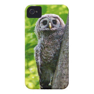 Cute Baby Owl iPhone 4 Cover