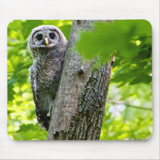 Cute Baby Owl Mouse Pad