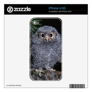 Cute Baby Owl on-a-Branch Multi Gifts iPhone 4 Decals