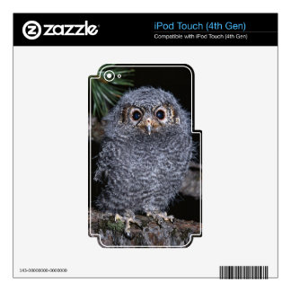 Cute Baby Owl on-a-Branch Multi Gifts iPod Touch 4G Decal