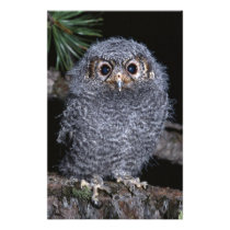 Cute Baby Owl on-a-Branch Multi Gifts Stationery