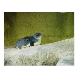 Cute Baby Penguin At Perth Zoo Postcard