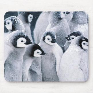 cute baby penguin penguins design mouse pad