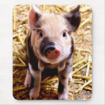 Cute Baby Pig Mouse Pad