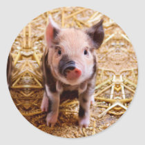 Cute Baby Piglet Farm Animals Babies Classic Round Sticker