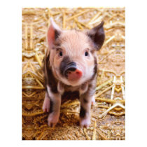 Cute Baby Piglet Farm Animals Babies Flyer