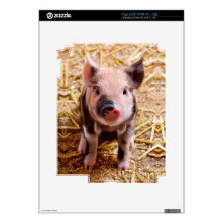 Cute Baby Piglet Farm Animals Babies iPad 2 Skin