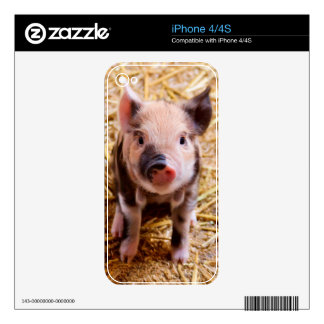 Cute Baby Piglet Farm Animals Babies iPhone 4 Decal