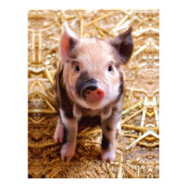 Cute Baby Piglet Farm Animals Babies Letterhead
