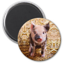 Cute Baby Piglet Farm Animals Babies Magnet
