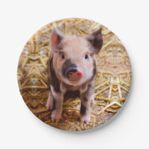 Cute Baby Piglet Farm Animals Babies Paper Plate