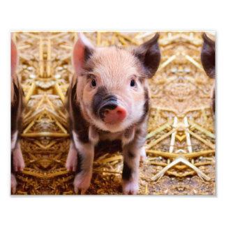 Cute Baby Piglet Farm Animals Babies Photo Print