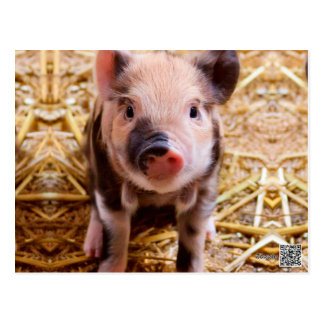 Cute Baby Piglet Farm Animals Babies Postcard